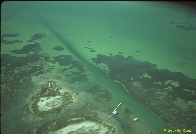 aerial view of a seagrass bed